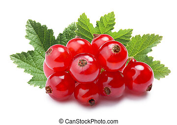 Redcurrant pile (Ribes Rubrum), paths