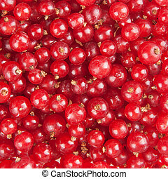 redcurrant background