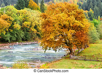 Reddened autumn tree background of green forest