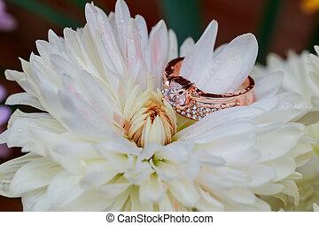 redding, fleurs, anneaux, fond blanc