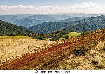 reddish weathered grassy carpet of hillside. beautiful...