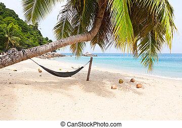 rede, árvore palma, praia tropical, ilha