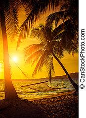 rede, silueta, com, coqueiros, ligado, um, bonito, em, pôr do sol