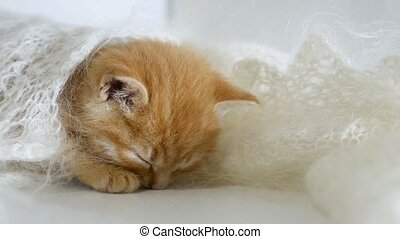 redhead little kitten asleep wrapped in a knitted shawl...