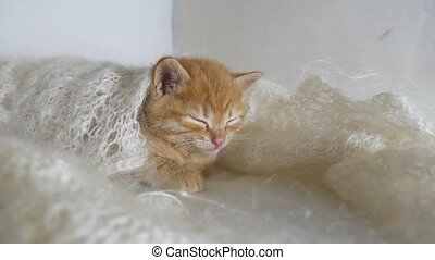 redhead little kitten cat asleep wrapped in knitted shawl...