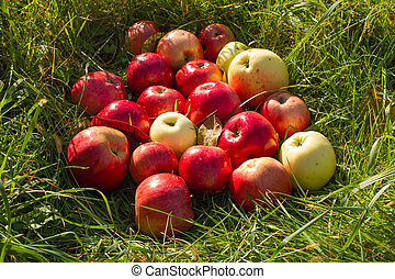 Red&white apples on the green grass