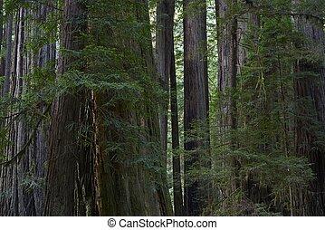 redwood αναδασώνω