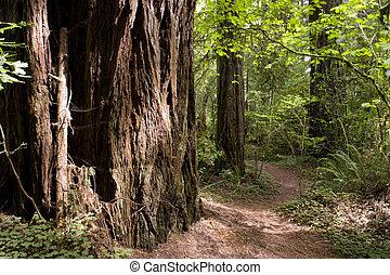 redwood, caminho