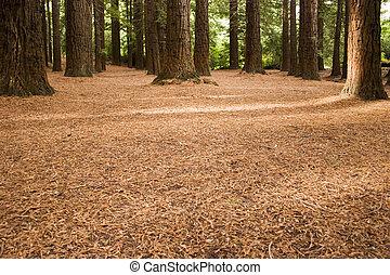 Redwood Forest 04 - Redwoods in Te Mata Peak Park, Hawke's ...