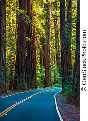 Redwood Forest Highway