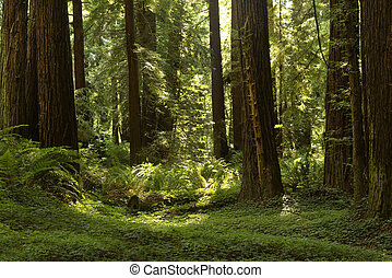 Redwood Grove California