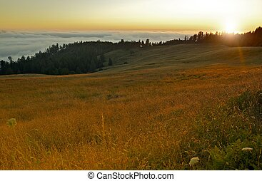Redwood Hills California