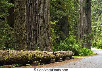 redwood, lugar