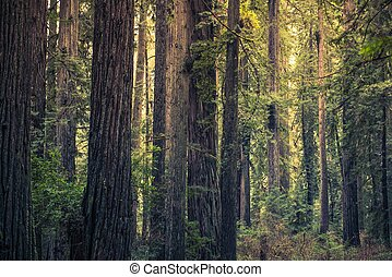 Redwood Mystery Forest