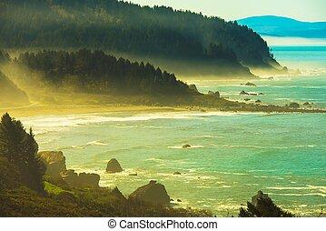 Redwood Pacific Coast - Foggy Redwood Pacific Ocean Coast....