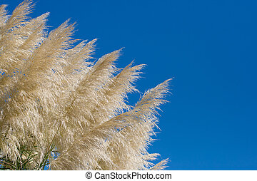 reed against a blue sky
