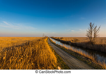 reed at a lake with street and brook with blue sky in the spring