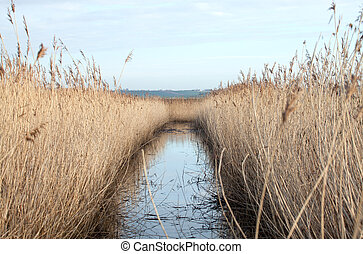 Reed Bed - Reed bed and water in Sussex countryside