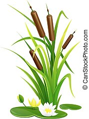 Reed bush thicket plant with green leaves and water lily...