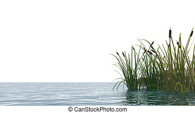 reed - isolated water landscape and reed - 3d illustration