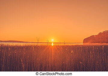 Reed in the sunrise
