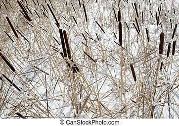 reed on snow-covered lake, winter landscape