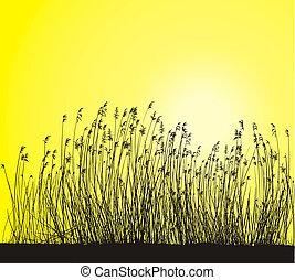 Stems blade of reeds, illustration