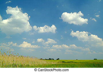 reed under a beautiful blue sky with white clouds