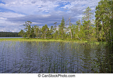 Reeded creek on a river. - Reeded creek on the Pistayoki...