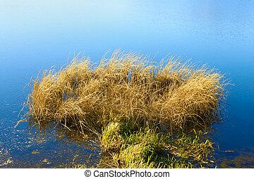Reeded in the reservoir (II)