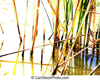 Reeds (1) - Reeds in a small pond in the park