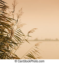 reeds against water at lake shore and industry landscape in ...