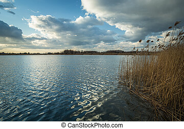 Reeds and a calm lake, clouds on the sky