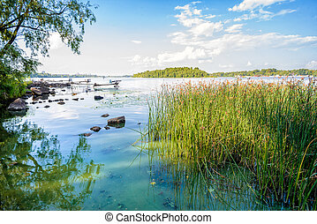 Reeds and Dnieper River