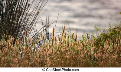 Reeds and Lake in Nature