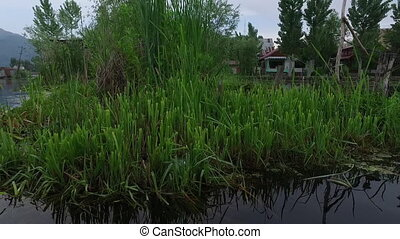 Reeds and Marsh on River - Handheld, exterior shot from a...