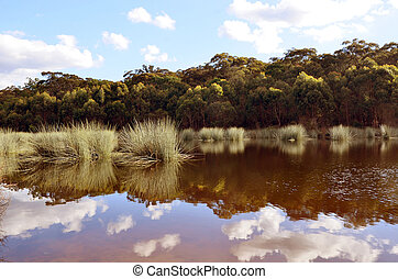Reeds and reflections in a tranquil lake