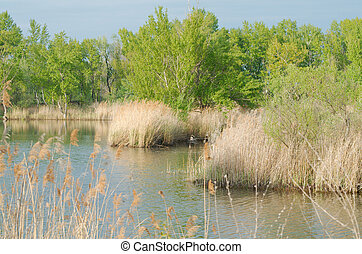 Reeds and Trees on the Lake Shore