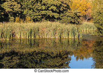 reeds and trees reflecting on lake