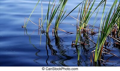 Reeds and Waves Loop