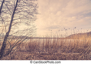 Reeds by a lake in the winter