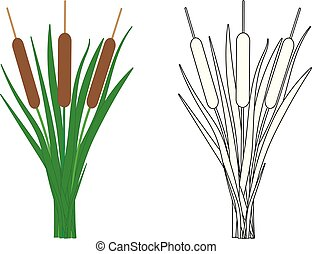 Reeds, coloring page. Vector illustration