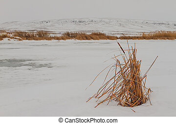 Reeds in a frozen lake.