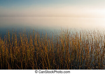 Reeds in calm lake at dawn