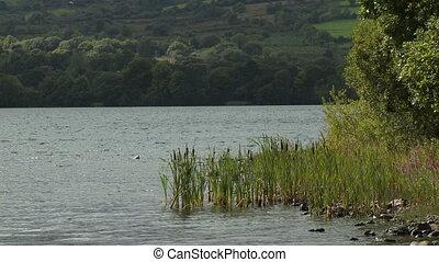 Reeds in Lake and Prairie Hills - Steady, medium wide shot...