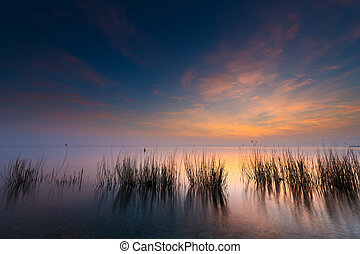 reeds in lake at sunset with cloudy blue orange sky
