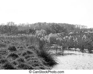 Reeds in River