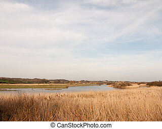 reeds nature growing side bank of river stream water sky blue clouds spring background