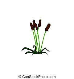 Reeds. On isolated white background. Vector illustration, flat