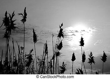Reeds on sky background